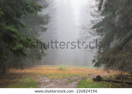 Autumn rain and fog in forest - stock photo