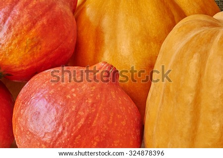 Autumn red and orange pumpkins in a rustic style. Beautiful autumn Pumpkins Halloween background