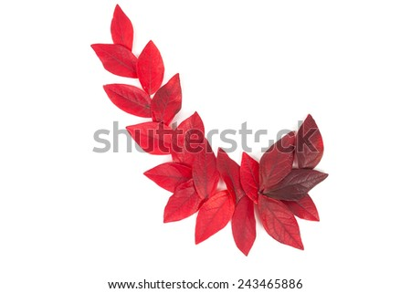 autumn red leaves isolated on white - stock photo