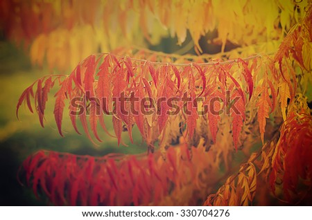 Autumn red tree branch with leaves, natural fall vivid hipster background - stock photo