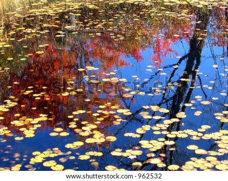 Autumn Reflections #1 - stock photo