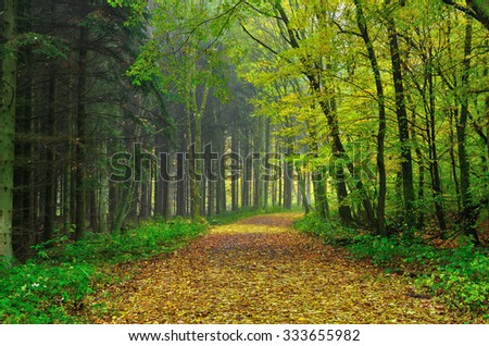 Autumn road in a german forest - stock photo
