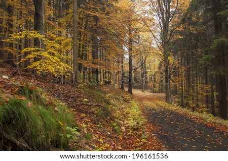 Autumn road in the forest during the fall season - stock photo