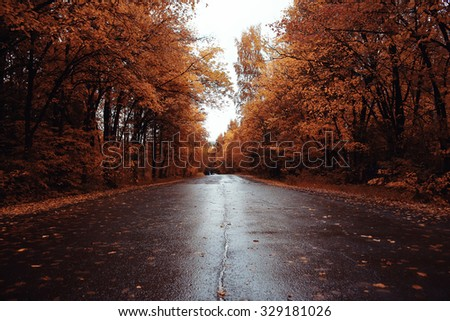 Autumn road landscape - stock photo