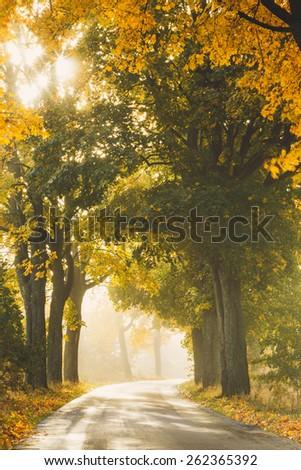 Autumn Road Morning Light in North Poland/ Autumn Road - stock photo