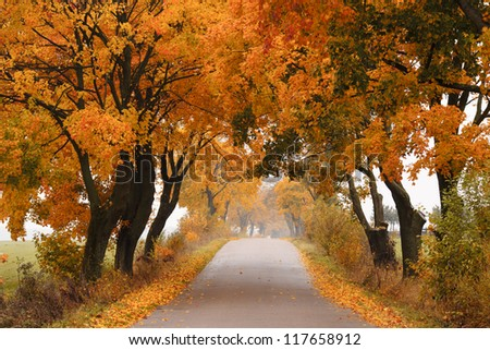Autumn - road with colorful, vibrant maple trees. Fall in Poland. - stock photo