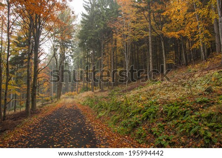 Autumn road with the fallen orange leave - stock photo