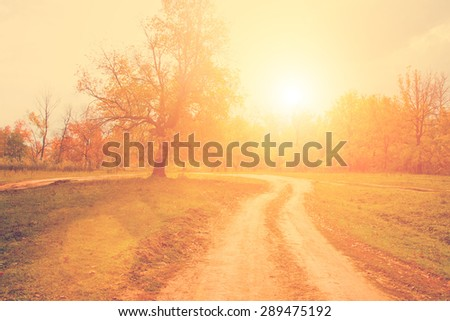 Autumn rural landscape with trees and road - stock photo