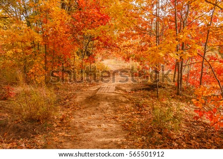 Autumn scene. Fall scene. Beautiful Autumnal park. Beauty nature scene. Autumn landscape, Trees and Leaves, surreal autumn