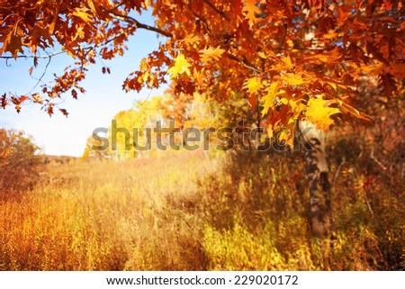 Autumn scene in Wisconsin - stock photo