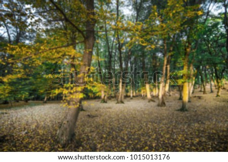 Autumn scene of colorful forest full of fallen yellow, red, and orange leaves. Changing seasons. Calm and relaxing hike in dark and spooky woods during sunset