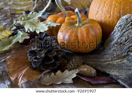 Autumn scene with pumpkins and acorns - stock photo