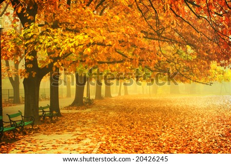 autumn scenery; alley in a park