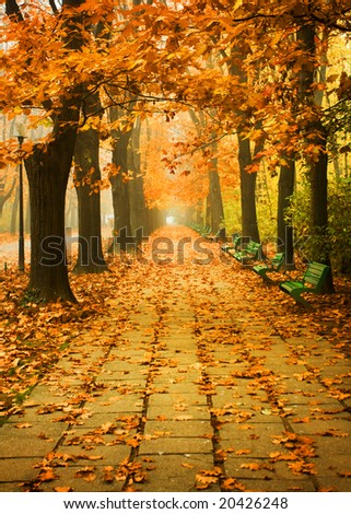 autumn scenery; alley in a park - stock photo