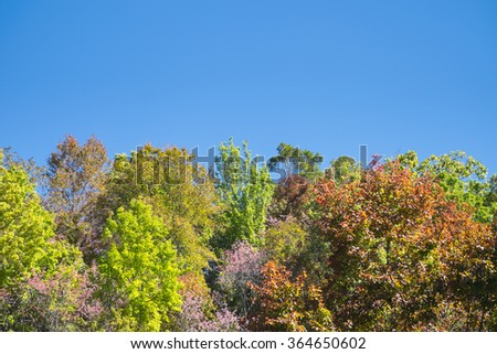 Autumn season many color leafs with blue sky background in nature - stock photo