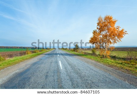 Autumn secondary country road and yellow birch on side