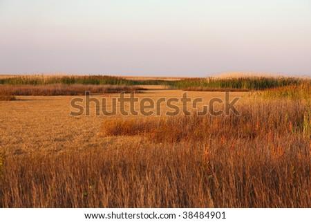 Autumn Sedge - stock photo