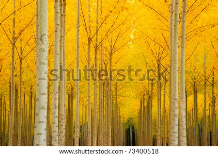 Autumn sets in creating yellow fall color in the Trees Outside