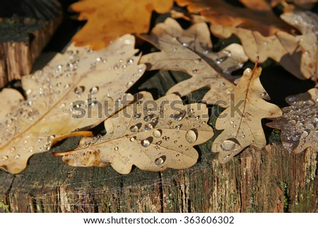 Autumn sketch. Pastel background with tree and oak autumn leaves with dew drops - stock photo
