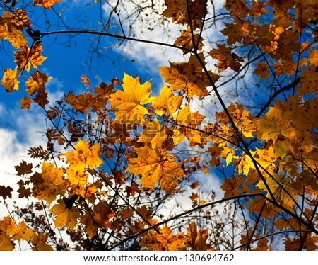 autumn sky leaf - stock photo
