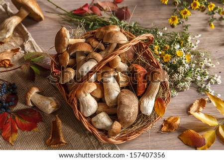 Autumn still-life with full basket of mushrooms / studio photography of gustable mushrooms in a wicker basket  - stock photo