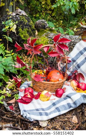 Autumn still life with pumpkin, grape leaves and apples