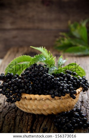 Autumn Still-Life with ripe black Elderberries - stock photo