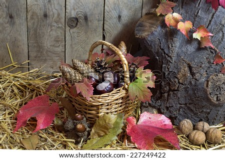 Autumn Still Life with Wicker Basket Filled with Pine Cones, Acorns, Chestnuts, Red Autumn Leaves and Nuts on a Hay, Vintage Wooden Planks  Background  - stock photo