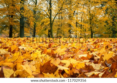 Autumn still life with yellow maple leaves in foreground - stock photo