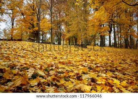 Autumn still life with yellow maple leaves in foreground