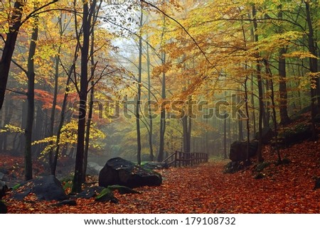 Autumn stream in the forest in misty day  - stock photo