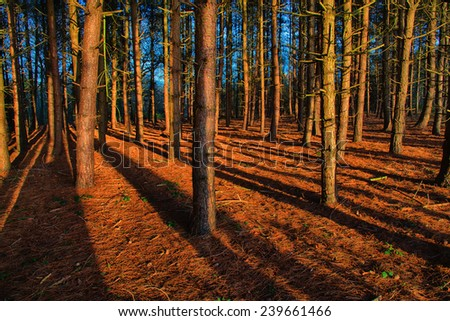 Autumn sun casting long shadows in the evening - stock photo