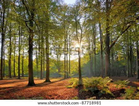 Autumn sun in forest - stock photo