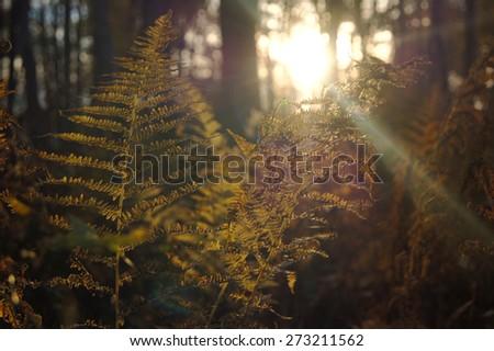 Autumn sunlight through fern leaves in the park - stock photo