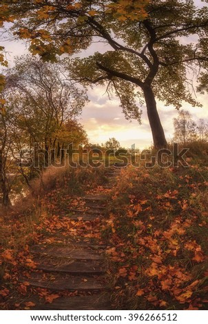 autumn sunny day. Beautiful road, path, foliage and old big tree in the forest. charming vertical landscape