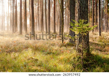 Autumn sunny morning in the forest