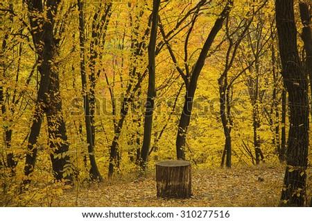 Autumn sunny park with yellow trees, natural seasonal background - stock photo