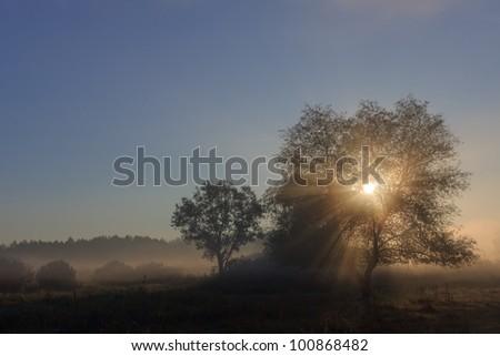 Autumn sunrise on the river bank. Foggy morning - stock photo