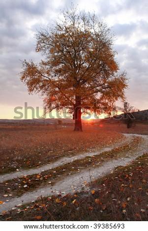 autumn sunrise with beauty tree - stock photo