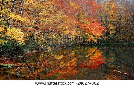 Autumn Swamp Scenery ~ Wetlands bathed in golden light and protected in a deep forest of colorful autumn foliage with reflections on smooth water. In Tsutanuma, Towada Hachimantai, Aomori , Japan. - stock photo