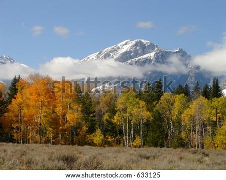 Autumn Tetons in Snow - stock photo