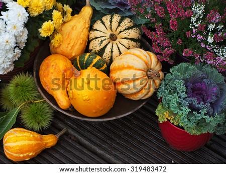 Autumn thanksgiving decor with pumpkins, flowers in garden - stock photo