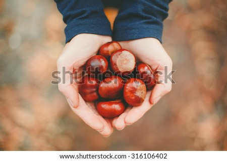 Autumn time. Handful of conkers with slight added vignette - stock photo