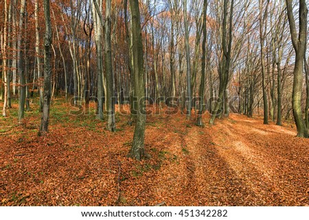 Autumn time in the Carpathian forest