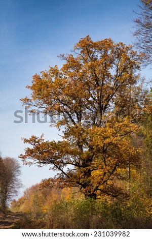 Autumn tree against blue sky - stock photo