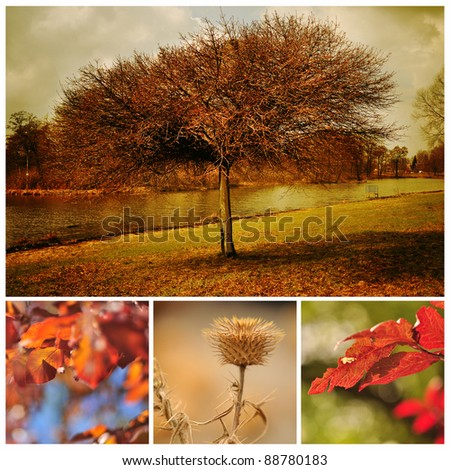 Autumn tree and red autumn leaves - stock photo