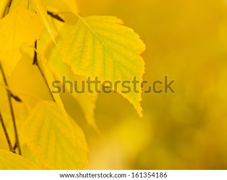 Autumn tree branch, natural seasonal background