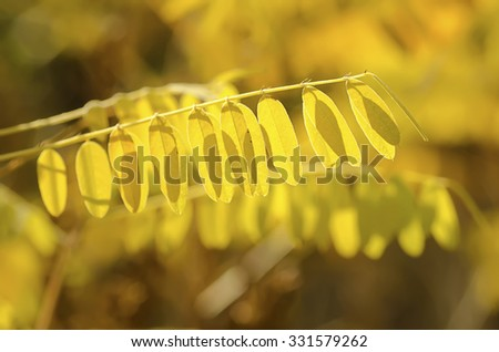 Autumn tree branch with leaves, natural fall vivid background - stock photo