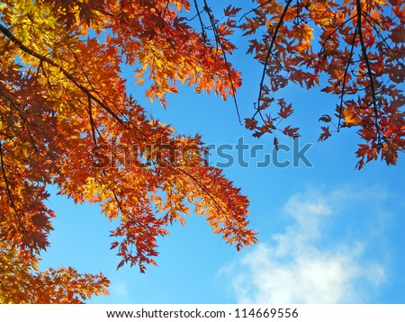 Autumn tree branches against a blue sky.