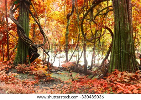 autumn tree, deep forest ,Beautiful brown colored foggy forest trees with forest road. - stock photo